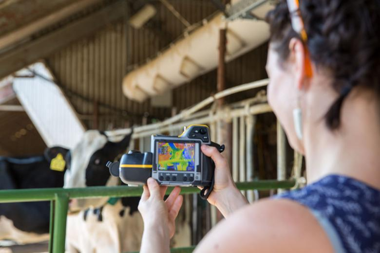 Person recording thermal image of cow.
